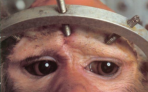 Jane Goodall no vivisection