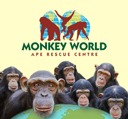 Monkey world ape rescue center