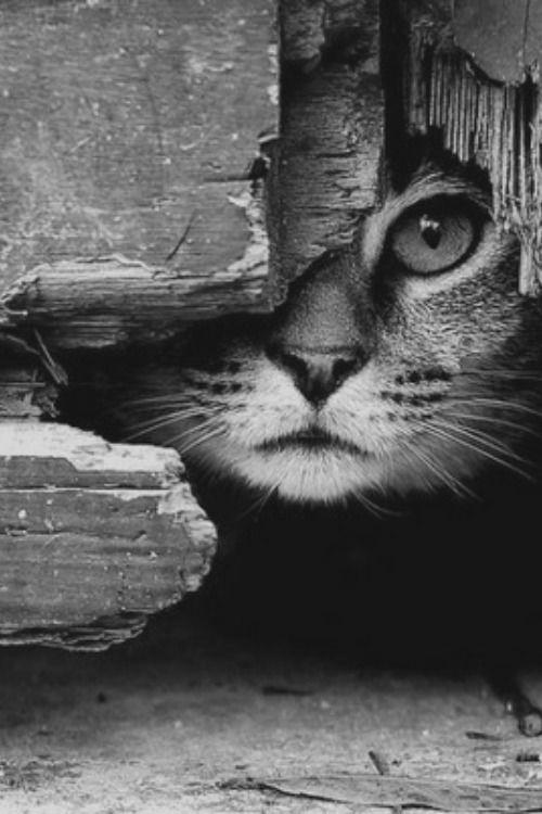 pensieri e poesie sul gatto