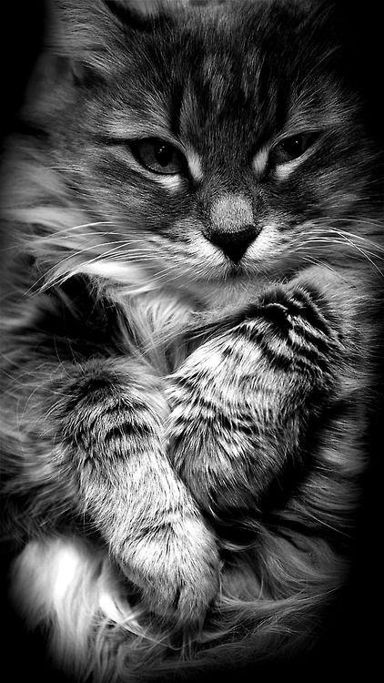 pensieri sui gatti