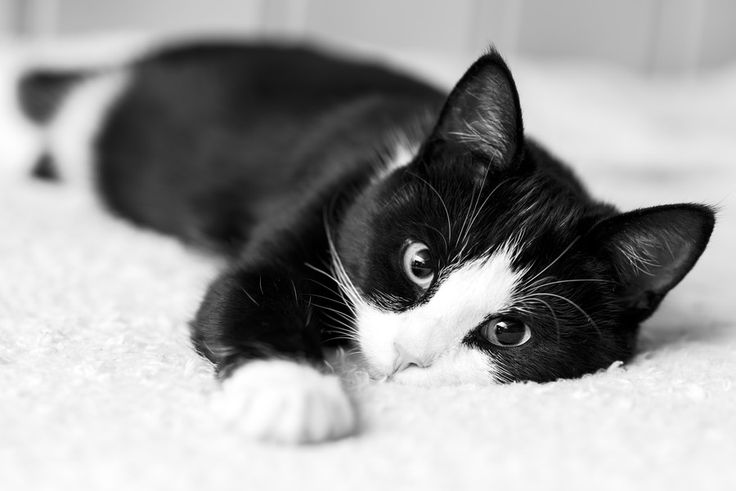 pensieri sul gatto