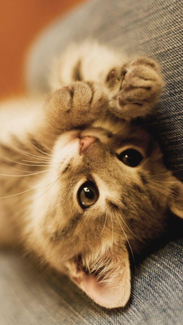 Pensieri citazioni aforismi sul gatto for Foto beautiful