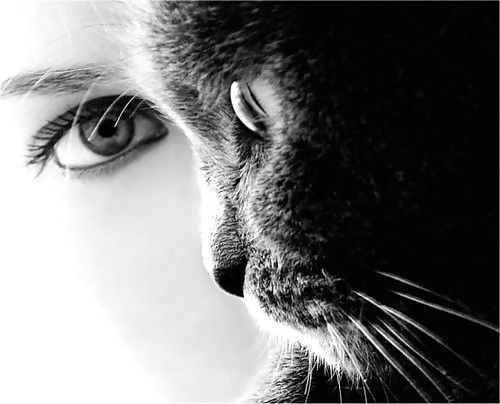 donne e gatti