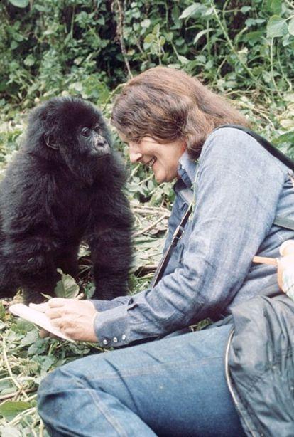 dian fossey gorilla di montagna