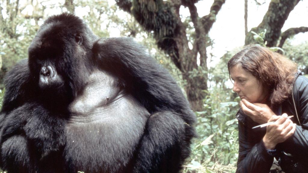 Dian Fossey insieme al suo amato gorilla Digit.