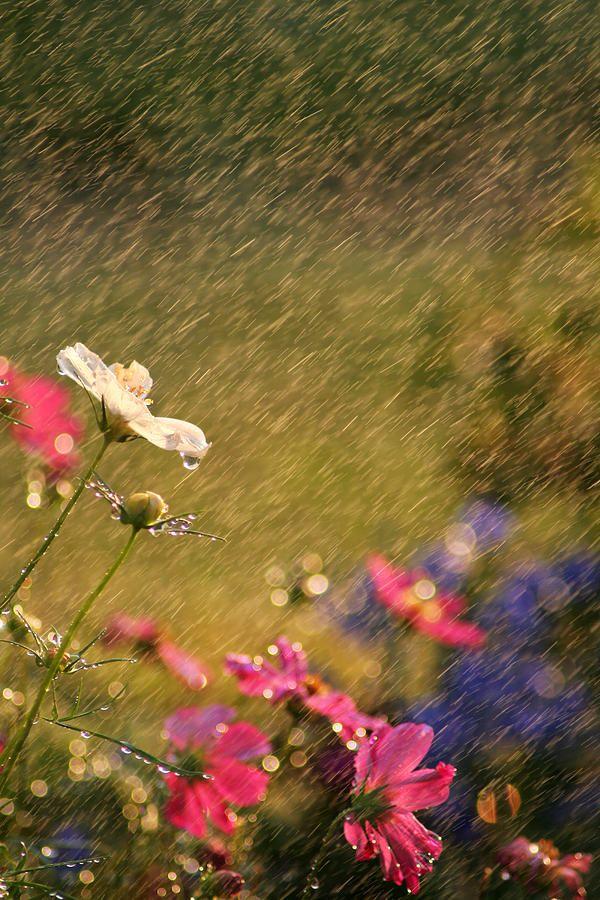 La pioggia, pensieri e citazioni
