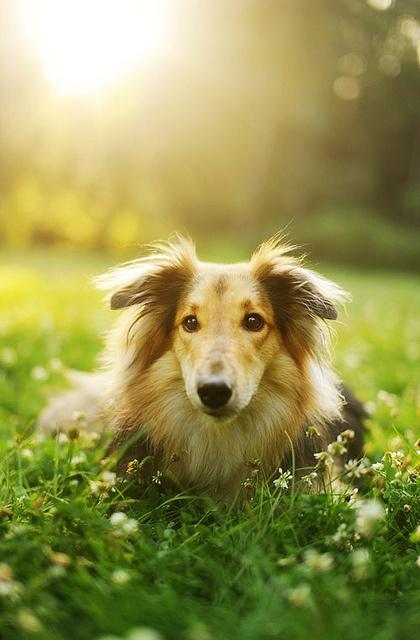 pensieri sul cane