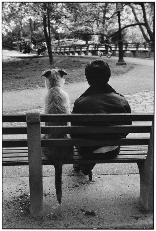 Pensieri E Citazioni Sul Cane