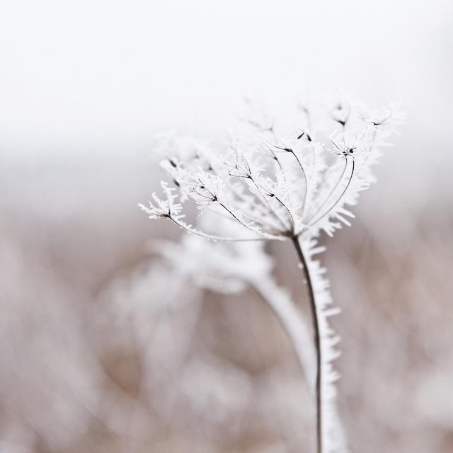 pensieri e citazioni sull'inverno