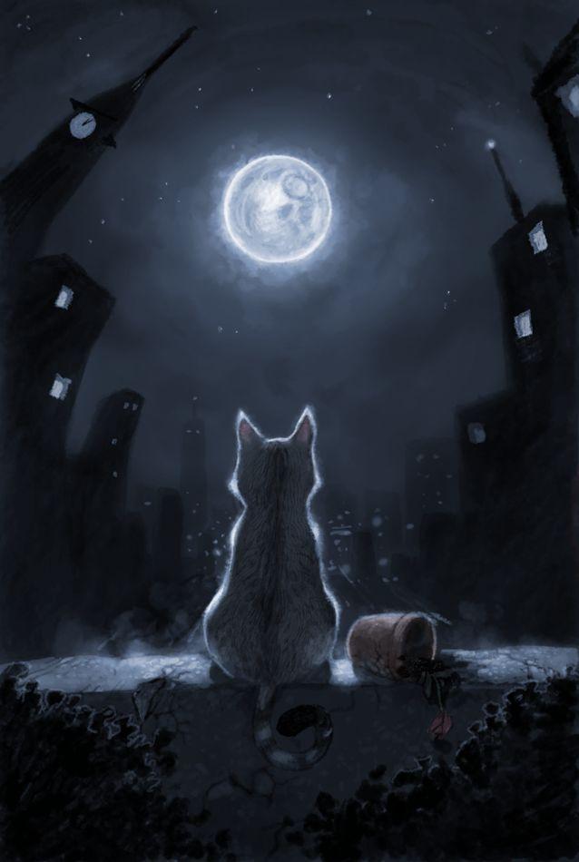 dolore e gatti