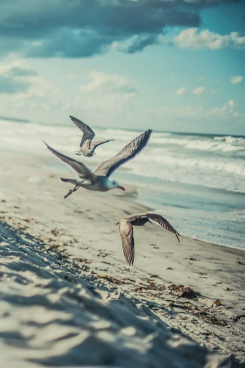 Pensieri Frasi E Citazioni Sulla Libertà