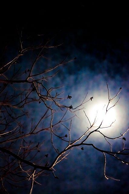 Eccezionale Pensieri, poesie, citazioni e aforismi sulla luna XV18