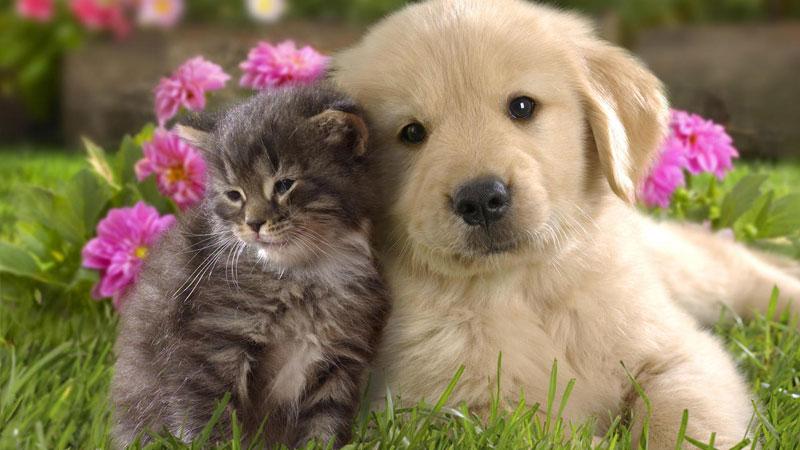 è Più Intelligente Il Cane O Il Gatto