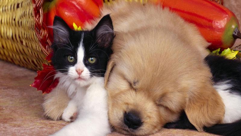 Intelligenze diverse tra cani e gatti