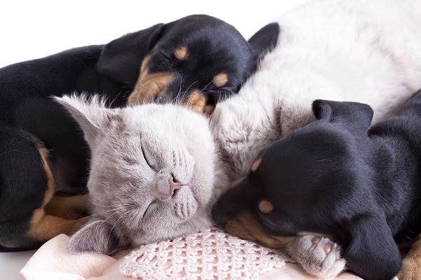 L'intelligenza del cane e quella del gatto