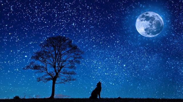 Cagna e luna, poesia di Fedor Sologub
