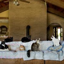 The Cat House on the Kings, il rifugio più grande del mondo per i gatti abbandonati