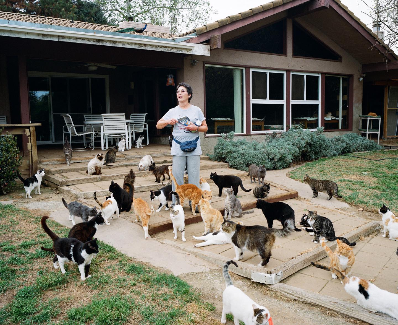 The Cat House on the Kings, un rifugio in California per salvare i gatti randagi