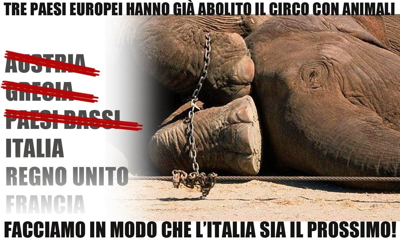 La Crudeltà Del Circo Con Animali