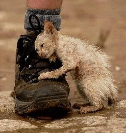 """Non tutti gli esseri umani sono """"esseri senzienti"""". Alcuni sono solo una scarpa. Anche meno. Una scarpa serve. (cit.) ( Il fotografo che catturò questa famosa immagine raccontò di essere rimasto turbato dall'indifferenza dell'uomo con lo scarpone. Dopo aver effettuato lo scatto, il fotografo ed una donna salvarono il micetto"""