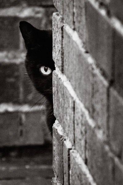 Apprezzo le caratteristiche genetiche del gatto. Le trovo meravigliose! Tollera gli altri, purché non lo infastidiscano; sa amare senza instaurare dipendenza. E sta molto bene da solo. Renata Mucci