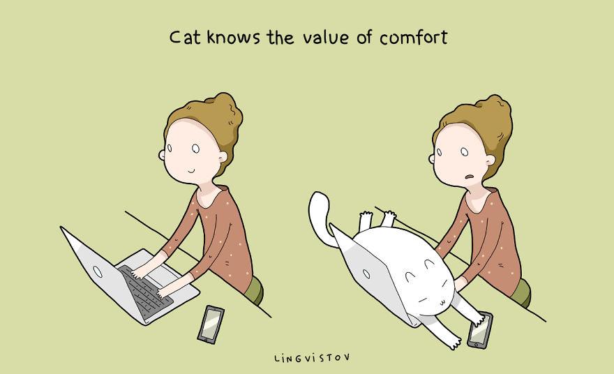 """""""Il gatto conosce il valore della comodità."""""""