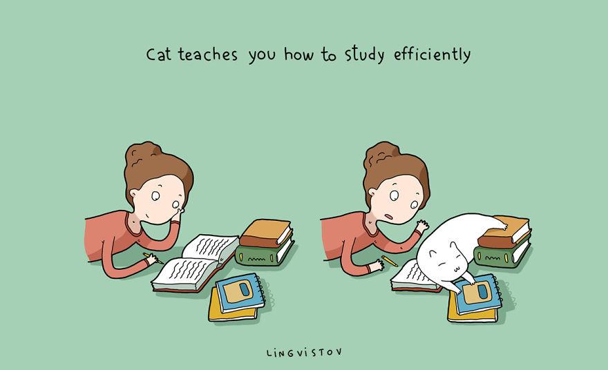"""""""Il gatto t'insegna a studiare in modo efficiente."""""""