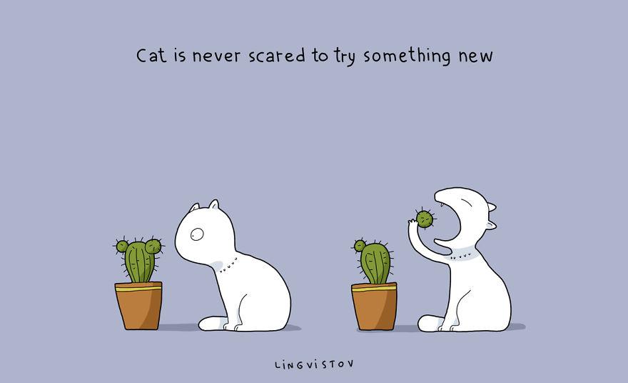 """""""Il gatto non è mai spaventato dal provare qualcosa di nuovo""""."""