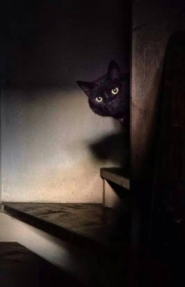 Vieni sul mio cuore innamorato, mio bel gatto: trattieni gli artigli e lasciami sprofondare nei tuoi occhi belli, misti d'agata e metallo. _ Charles Baudelaire _ Immagine reperita nel web