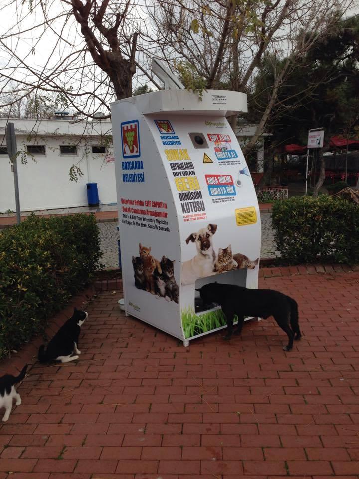 Un distributore di cibo per cani e gatti randagi ad Istanbul.