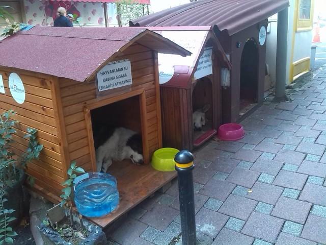 Cucce per cani randagi a Istanbul