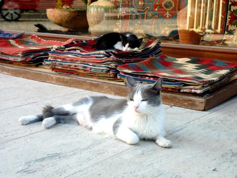Gatti turchi che riposano davanti un negozio di souvenir.