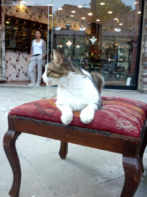 Un gatto riposa sopra un comodo sgabello esposto in un negozio.