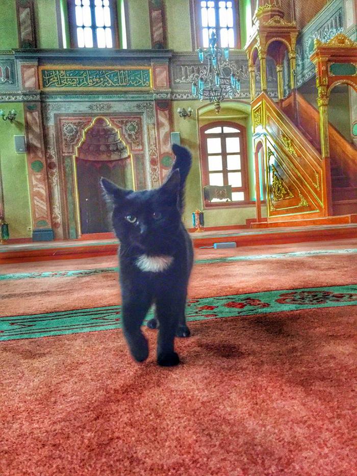 Un altro ospite della moschea dell'imam Mustafa Efe. Fotografia di Navèëd
