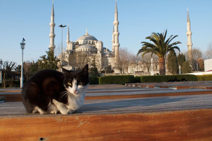 Una veduta della moschea Aziz Mahmud Hüdayi. Fotografia di Brian Gratwicke.