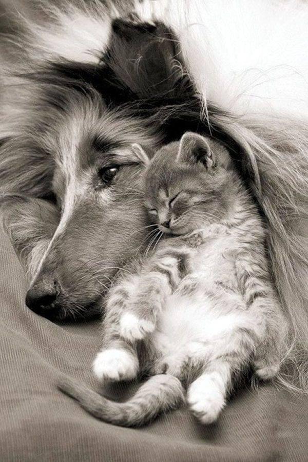 Nella pacatezza dello sguardo degli animali parla ancora la saggezza della natura; perché in essi la volontà e l'intelletto non si sono ancora distaccati abbastanza l'uno dall'altro per potersi, al loro rincontrarsi, stupirsi l'uno dell'altra. _ Arthur Schopenhauer _ Immagine reperita su BuzzFeed