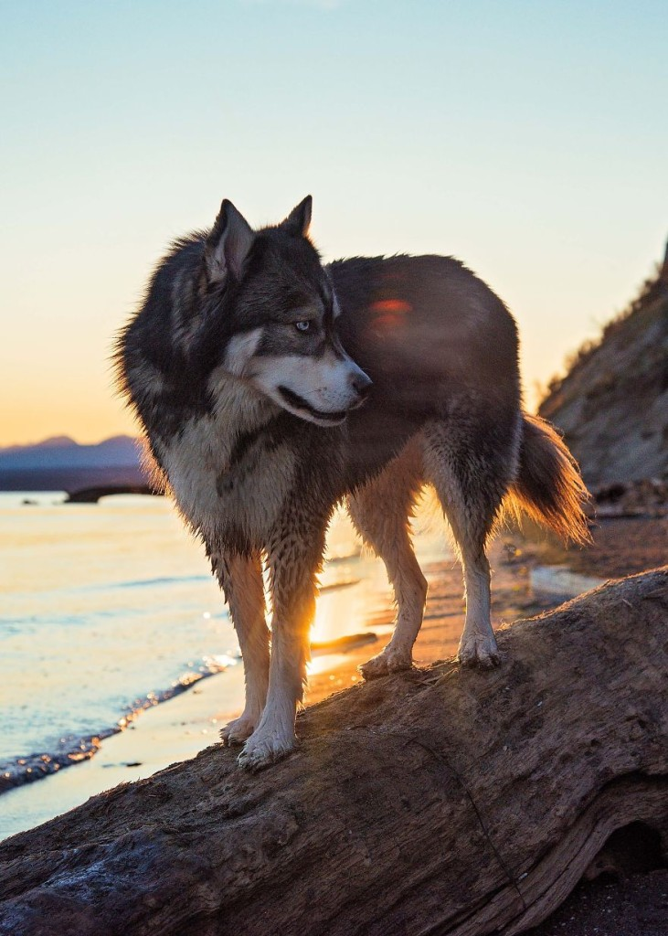 """""""Con Kyro al mio fianco ho imparato ad essere coraggiosa e a sperimentare cose che prima non avrei mai immaginato di fare. Per esempio alzarmi alle tre del mattino per un'escursione solo per guardare l'alba tra le montagne."""""""