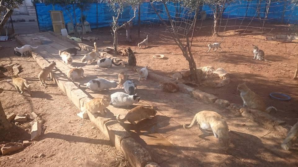 """Alcuni ospiti del rifugio """"La casa dei gatti Ernesto""""."""
