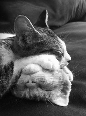 Dormire non è una perdita di tempo, i gatti ci insegnano che il riposo ci rende più forti. (Cit.) Immagine reperita nel web.