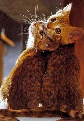 Forse i gatti sono qui per insegnarci questo: a vivere l'attimo in modo così completo, con un totale coinvolgimento, che lo faccia durare in eterno. Jeffrey Moussaieff Masson, La vita emotiva dei gatti, 2002 Immagine reperita nel web