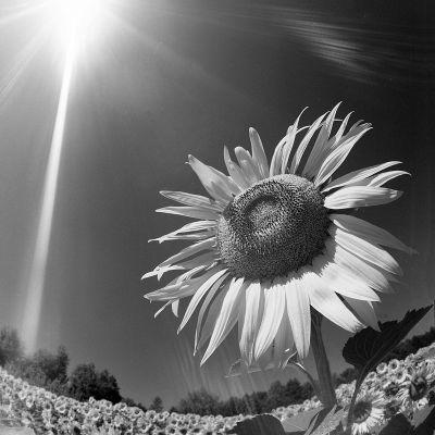 Chi non sa far luce, almeno non faccia ombra. (Cit.) Immagine reperita nel web