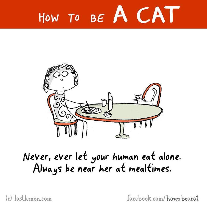 """""""Non permettere mai che la tua umana mangi da solo. Sii sempre accanto a lei durante i pasti."""""""