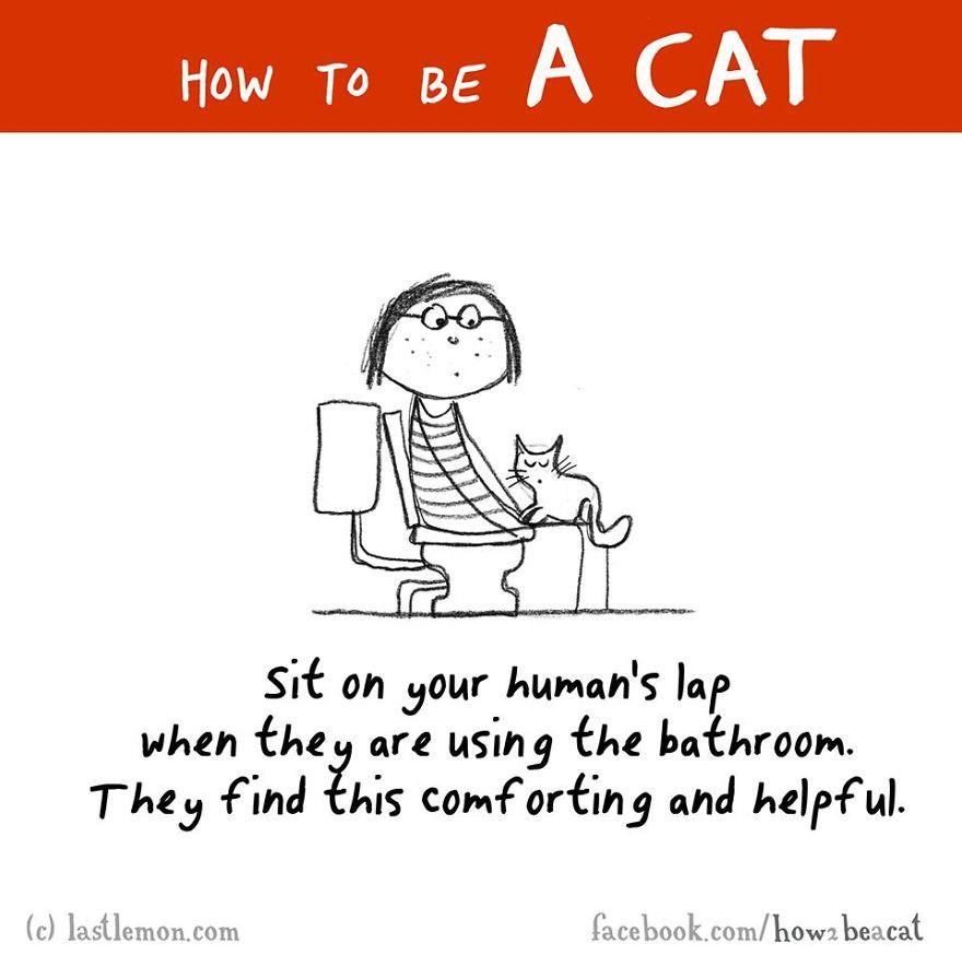 """""""Siediti sul grembo del tuo umano quando usa il bagno. Lo trovano confortante e utile."""""""