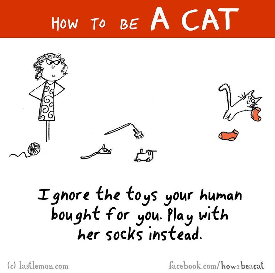 """""""Ignora tutti i giochi che il tuo umano ti compra. Gioca invece con i suoi calzini."""""""