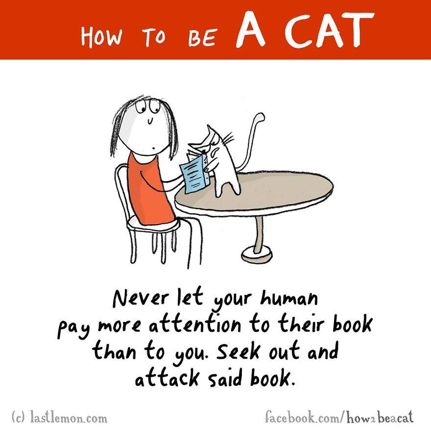 """""""Non permettere mai che il tuo umano presti piu' attenzione ad un libro che a te. Cerca di trovarlo e di attaccare il suddetto libro."""""""