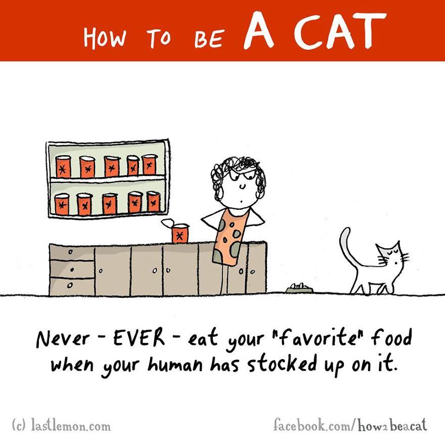 """""""Non ti azzardare mai a mangiare il tuo cibo """"preferito"""" se la tua umana ne ha fatto rifornimento."""""""