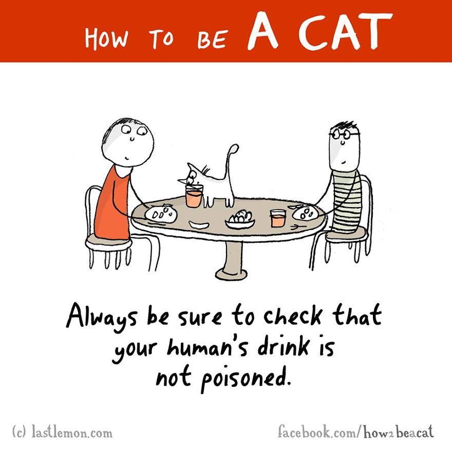 """""""Assicuratii sempre di controllarei che la bevanda del tuo umano non sia velenosa."""""""