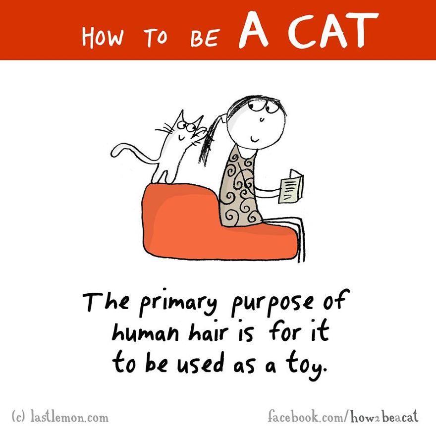 """""""Lo scopo primario dei capelli umani e' quello di essere usati come un giocattolo."""""""