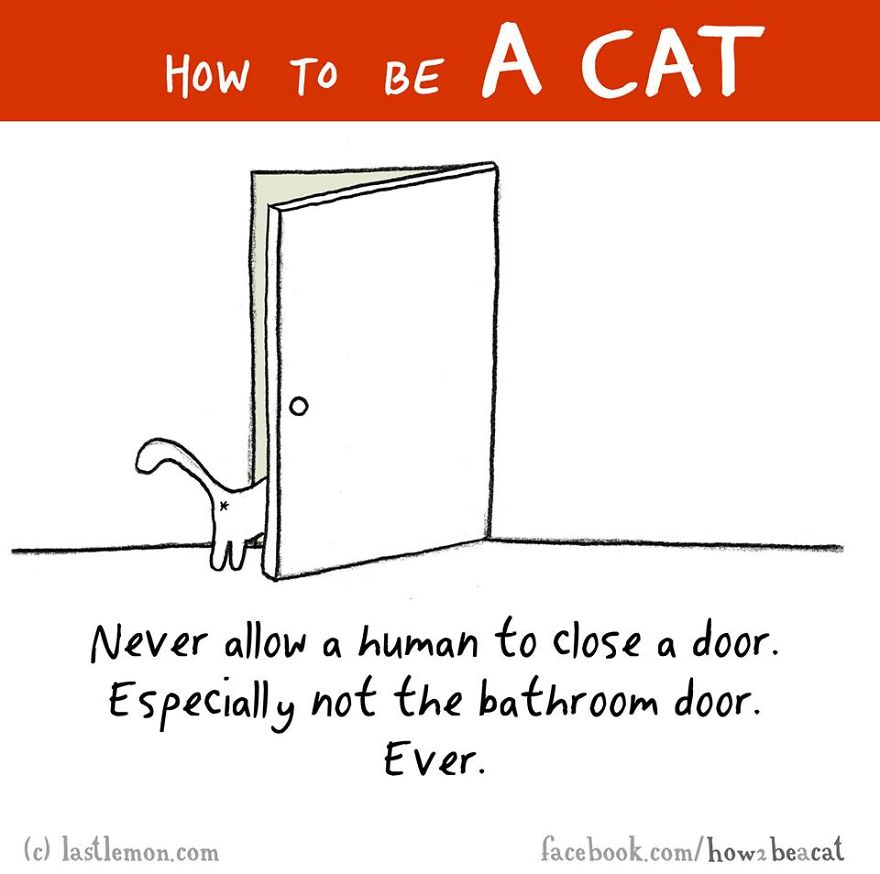 """""""Non permettere mai ad un umano di chiudere la porta. In particolar modo quella del bagno. Mai."""""""