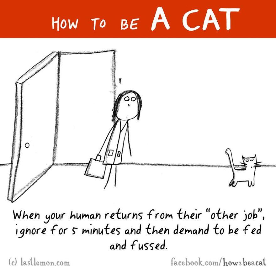 """""""Quando i tuoi umani tornano dal loro """"altro lavoro"""", ignorali per cinque minuti e poi chiedi di essere nutrito e coccolato."""""""